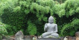 Sreening Bamboo Gracilis